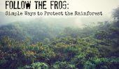 Suivez la grenouille: façons simples de protéger la forêt tropicale