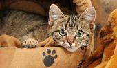 Détecter et traiter la cystite chez les chats