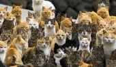 Il ya un endroit connu sous le nom de Cat Island, et il est exactement ce que cela ressemble
