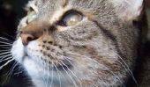 Quelle est la vraie nature de votre chat?