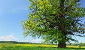 Anciens géants - Itinéraire long des plus anciens arbres en Allemagne