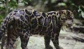 Top 10 des plus grandes races de chats dans le monde en 2014