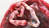 Chiens et le cordon ombilical - d'information