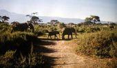 Chalet à vendre au Kenya - donc vous familiariser avec les lois