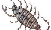 Scorpion en Allemagne?  - En savoir plus sur pseudoscorpions