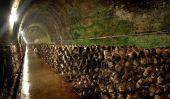 Le tunnel de champignons à Mittagong
