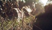 Araignées volantes