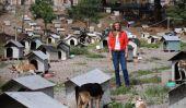 Actrice Mexican & Host Montserrat Oliver Goes to Favela Pour 1600 Dogs, se fait mordre pendant l'enregistrement Segment