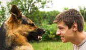 Peur des chiens surmonter - si réussit de