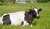 Formule dentaire de vache - explique compréhensible pour les profanes