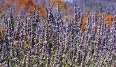 Assurez Lavender Herb sac lui-même - comment cela fonctionne: