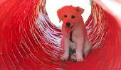 Le tunnel de l'agilité - afin que votre chien est en marche rapide par