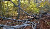 La chaîne alimentaire dans la forêt - de sorte qu'il ressemble