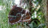 Exposition de papillon au RHS Garden Wisley, Royaume-Uni