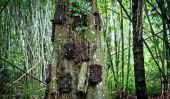 Les rites funéraires particulières de Tana Toraja