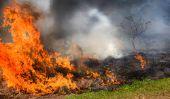 Avantages et inconvénients de la culture sur brûlis - une brève introduction
