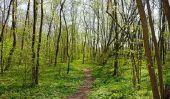 Jeux Scout - avec ce jeu vous apprendre à connaître mieux la forêt