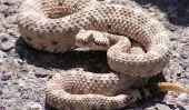 Top 10 des plus terrifiants Reptiles dans le monde
