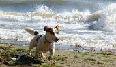 Nienhagen - Conseils de Voyage pour les vacances avec des chiens
