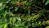 Brésil: Les matières premières et leur développement - un aperçu
