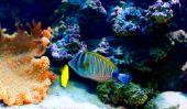 Discus - l'attitude avec d'autres poissons