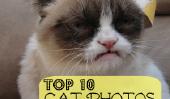 Mon Top 10 chat préféré Photos de l'année 2012