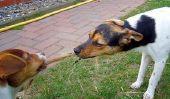 Qu'est-ce que je peux faire contre l'ennui chez les chiens?  - Comment faire joujou avec