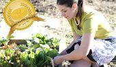 Continuez à célébrer la Semaine nationale de crêpes de blé entier avec Nourrissant levain Crêpes de Diana Bauman