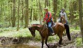 Faire voler signifie lui-même - remède à la maison pour les freins des chevaux