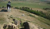 Salem Sue - Le plus grand vache du monde