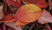 Bricoler avec les enfants - des idées avec des feuilles