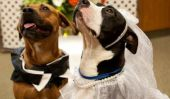 10 Photos de Mariages Doggie