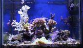 Marine Aquarium - le développement et l'entretien