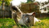 Chats et la chaleur - donc vous aider votre chat pendant l'été