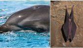 Les chauves-souris et les dauphins ont des traits génétiques similaires qui ont conduit à Echolocation