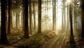 Pour survivre dans la forêt - un Guide Surival