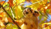 Face peinture - un visage de singe réussit si