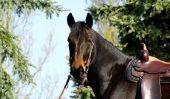 Apprendre l'équitation western - comment cela fonctionne: