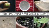 Comment faire pousser une plante Kiwi De Seed - DIY