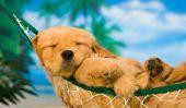 Procure chiens dans le refroidissement de chaleur - comment cela fonctionne: