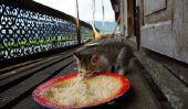 Cat Power sur le balcon installer - Instructions