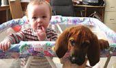 Enfants et les chiens: pourquoi ils sont si Identique (Attention: Extreme photo Cuteness)