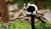 Monkey Park - si la sortie parvient à Apenheul en Hollande
