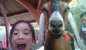Ces enfants Prouver Selfies Peut-être plus que juste un Duckface