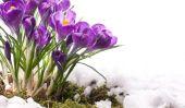 """""""Blackberry Winter"""" et d'autres mots liés à Spring"""