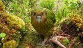 Concours de photos d'oiseaux les plus rares du monde