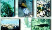 Plongée avec tuba à Fuerteventura - informations utiles pour la plongée dans la baie de Tarajalejo