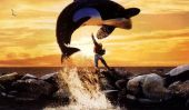 """Old Lady Movie Night: """"Free Willy"""""""