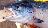 Gill - poissons de respirer tout simplement expliqué