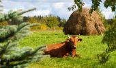 Farmville ne peuvent pas poster sur votre page Facebook - que faire?